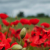 RemembranceDay2019Banner